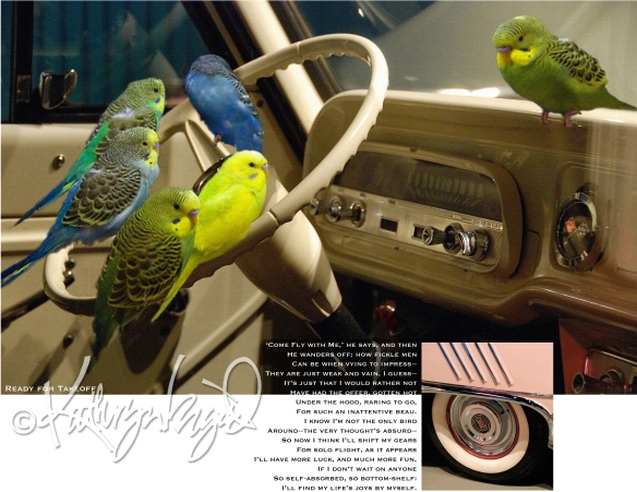 parakeets in car + text