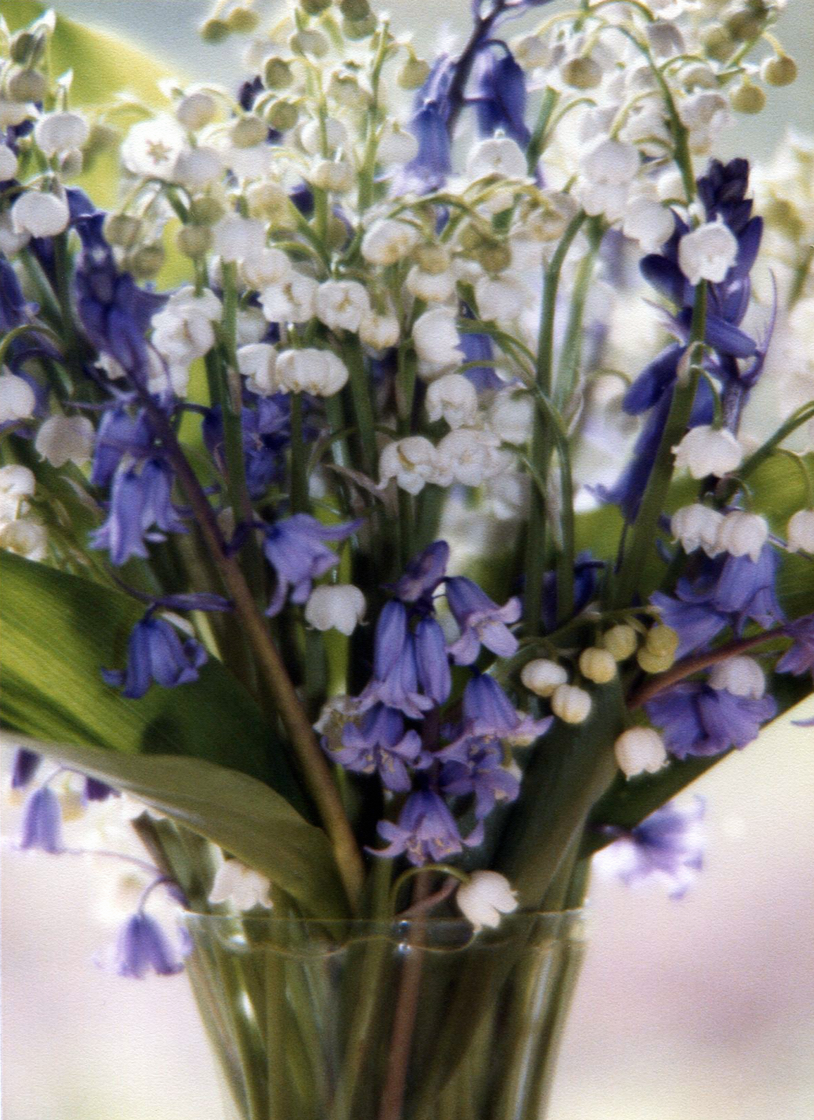 Lily of the valley art colored glasses photo izmirmasajfo