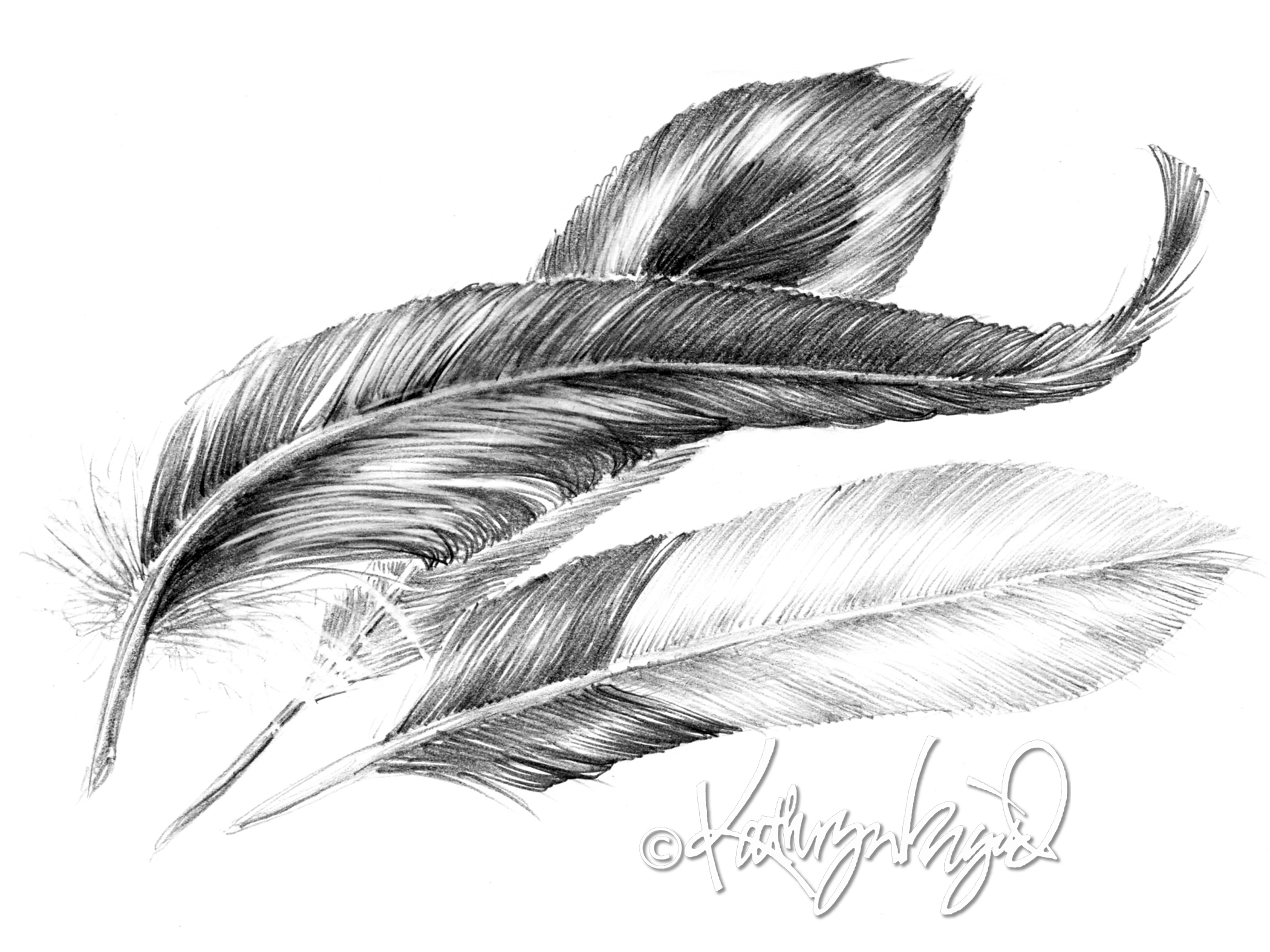 Line Drawing Feather : From heavy as lead to light a feather art colored glasses