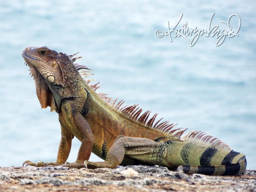 Photo: Magnificent Reptile