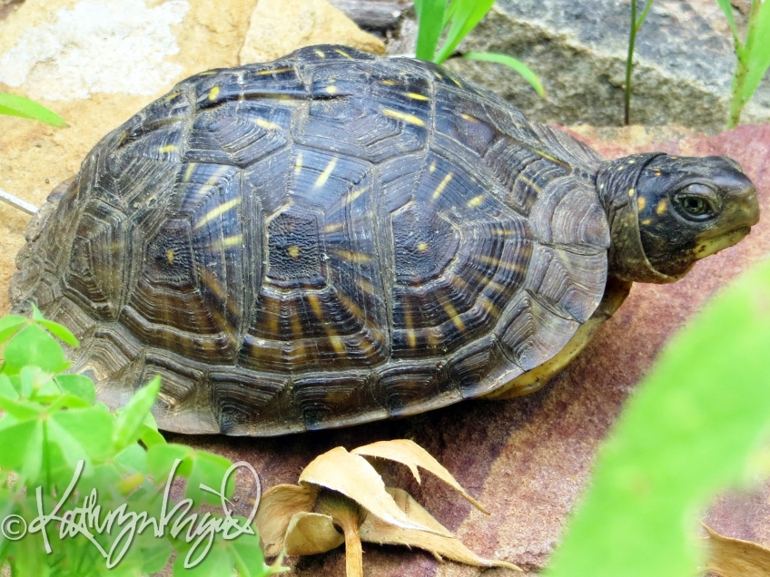 Photo: Tiny Tim (or Tina) Turtle