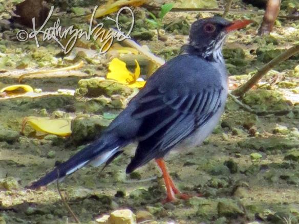 Photo: Shore Bird