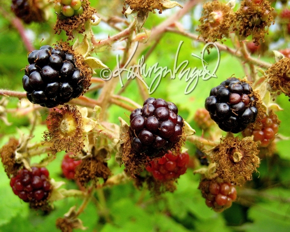 Photo: Blackberry Burst