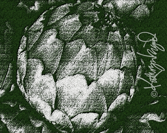 Digital illustration from a photo: Antique Artichoke