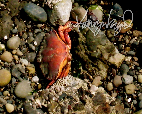 Digital painting from a photo: Feeling Crabby