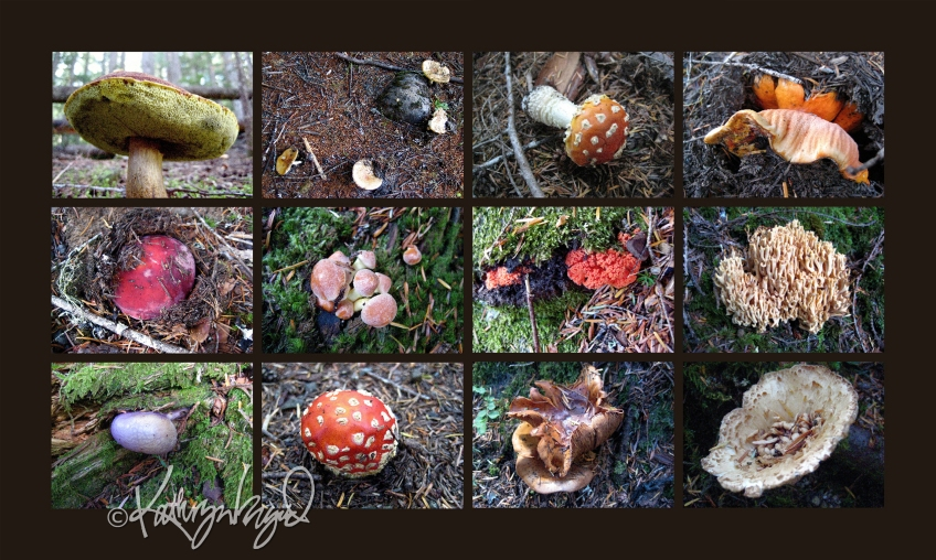 Photo montage: Mycological Mysteries