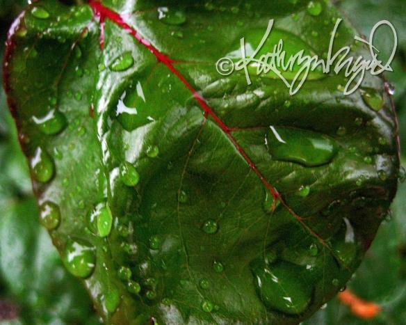 Photo: Fresh Greens