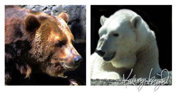 Photo montage: Grizzolar Talk