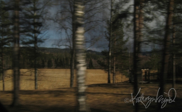 Photo: Seen from a  Train