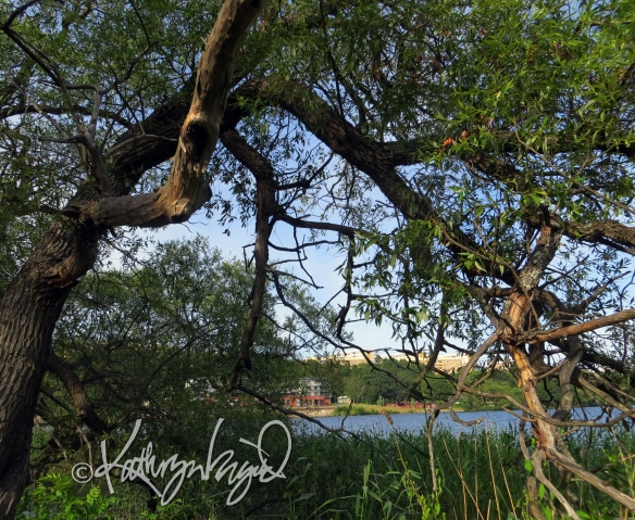 Photo: Under the Willow Tree 1