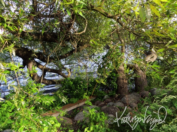 Photo: Under the Willow Tree 2