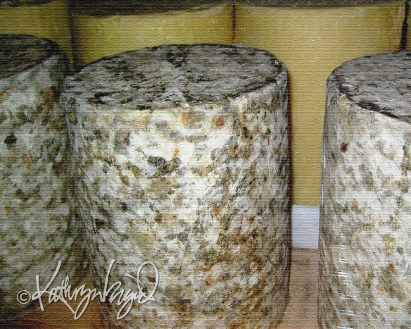 Photo: Aging Cheeses