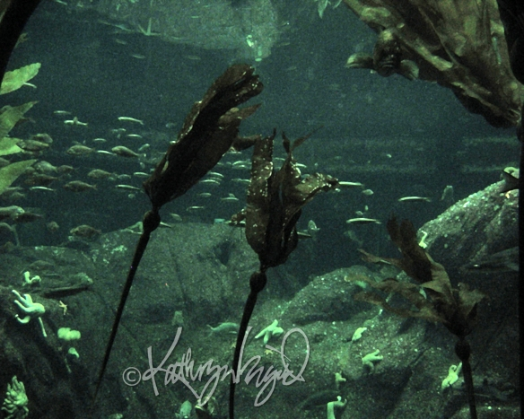 Photo: Waking Underwater