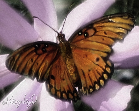 Digitally painted photo: Cosmic Butterfly