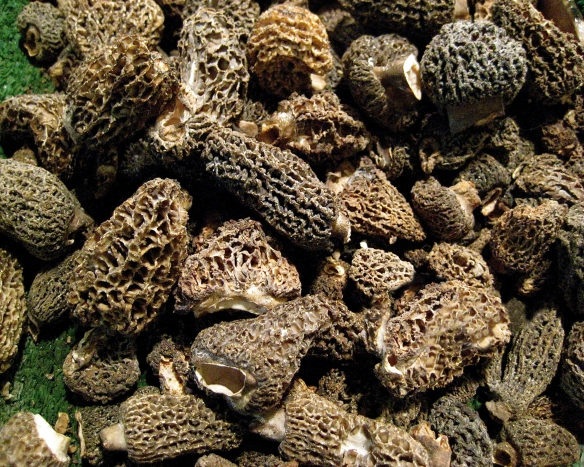 Photo: Morels