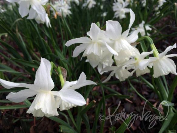 Photo: Thalia in Bloom