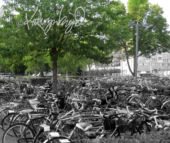 Photo: A Whole Rack of Bikes
