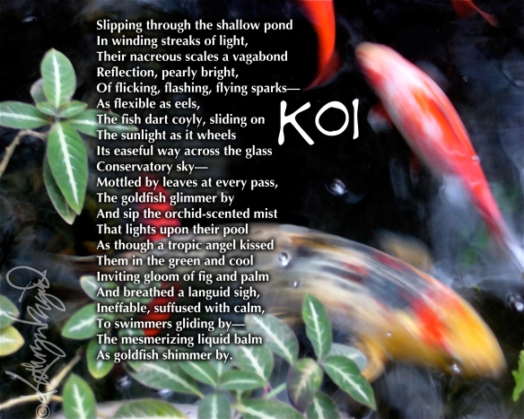 Digital illo from a photo + text: Koi