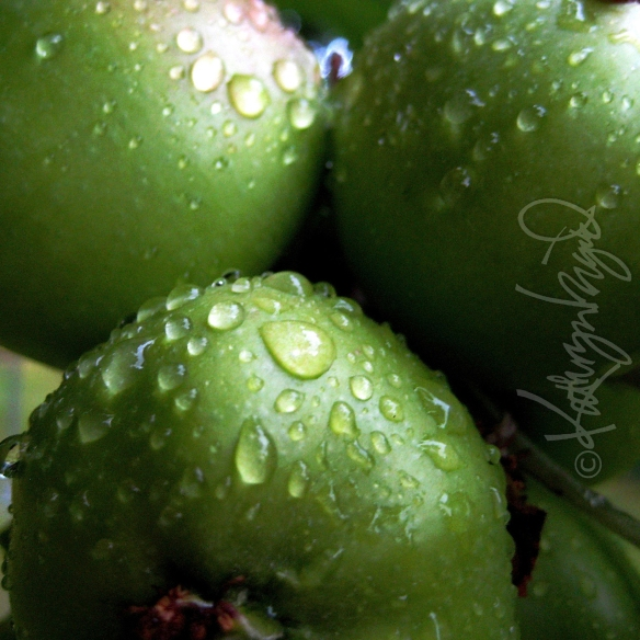 Photo: Sprightly Apples