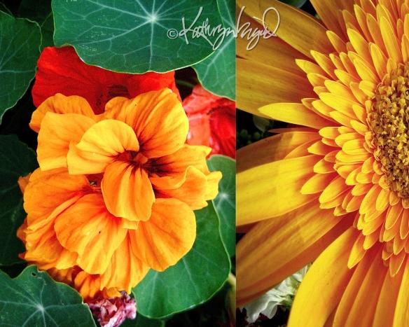 Photo montage: Odes to Orange