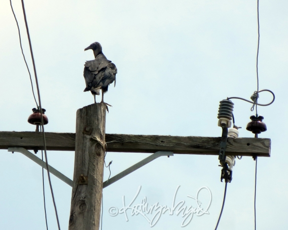 Photo: Vultures Watching Over Me