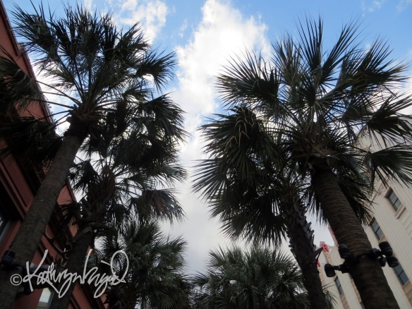 Photo: Palm Trees 1