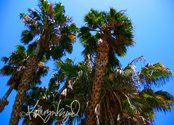 Photo: Palm Trees 2