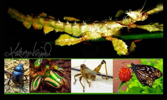 Photomontage: Pretty Insects
