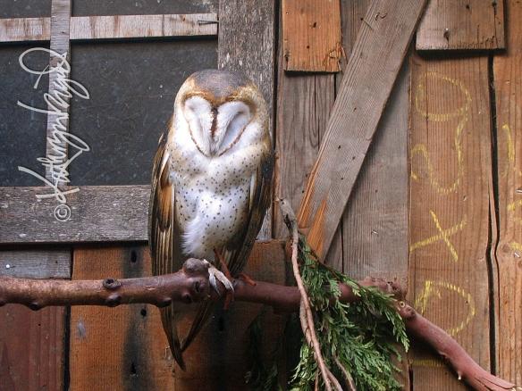 Photo: Wisdom Sleeps