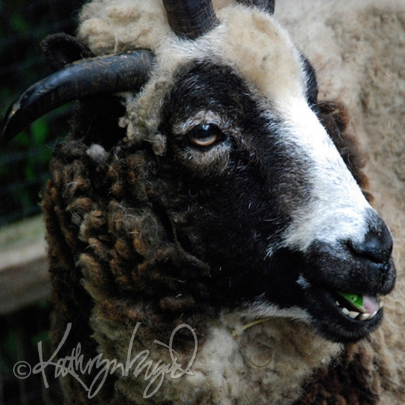 Photo: All We, Like Sheep