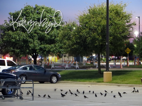 Photo: A Gathering of Grackles