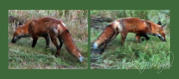 Photomontage: Fox Hunting