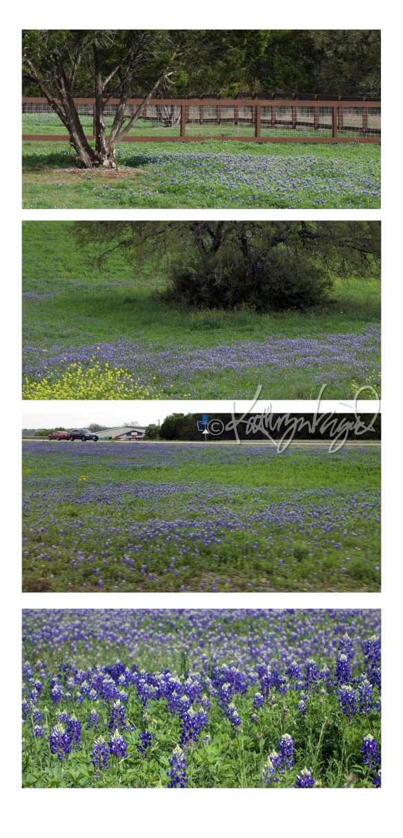 Photomontage: Bluebonnets for the Win